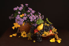 Autumn still life. With sunflowers flowers fruit grapes pears apples saffron royalty free stock photo