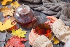 Autumn Still Life: Té en las hojas de arce en una tabla de madera Imagen de archivo libre de regalías