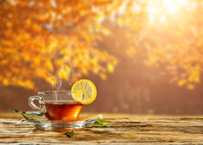 Autumn still life with tea cup on wooden planks Royalty Free Stock Photos