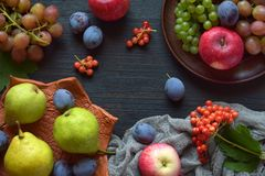 Autumn still life for thanksgiving with autumn fruits and berries on wooden background - grapes, apples, plums, viburnum, dogwood. Raw food. Copy space stock image
