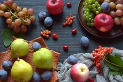 Autumn still life for thanksgiving with autumn fruits and berries on wooden background - grapes, apples, plums, viburnum, dogwood. Raw food. Copy space royalty free stock photo