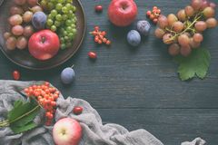 Autumn still life for thanksgiving with autumn fruits and berries on wooden background - grapes, apples, plums, viburnum, dogwood. Raw food. Copy space stock photography