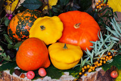 Autumn still life,Thanksgiving - harvest of different pumpkins, sea buckthorn, colorful leaves, vibrant background Stock Images
