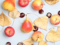 Autumn still life top view. Apples, pears, fallen leaves, chestnuts on a gray background royalty free stock photos