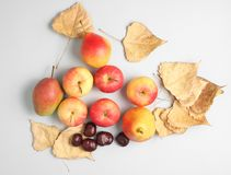 Autumn still life top view. Apples, pears, fallen leaves, chestnuts on a gray background stock image