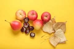 Autumn still life top view. Apples, pears, fallen leaves, chestnuts on yellow background stock photos