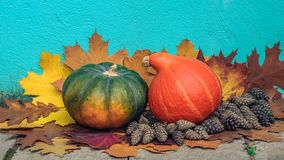 Autumn still life. two pumpkins and pine cones on fallen leaves against a background of a concrete plastered wall. Autumn still life. two pumpkins with pine vector illustration