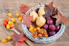 Autumn still life with various gifts of nature. After harvesting. Royalty Free Stock Photography