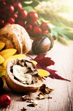 Autumn still-life with walnuts Royalty Free Stock Photography