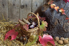 Autumn Still Life with Wicker Basket Filled with Pine Cones, Acorns, Chestnuts, Red Autumn Leaves and Nuts on a Hay Royalty Free Stock Photography