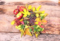 Autumn still-life with wild grape, apples and more Stock Image