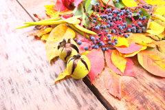 Autumn still-life with wild grape, leaves and more Stock Images