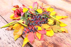 Autumn still-life with wild grape, leaves and more Royalty Free Stock Photo
