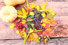 Autumn still-life with wild grape, leaves and more Stock Photography