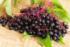 Autumn Still-Life With Ripe Black Elder Berries Royalty Free Stock Photos
