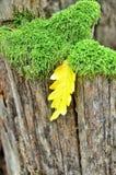 Autumn Still Life Royalty Free Stock Photos