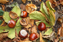 Autumn still live royalty free stock images