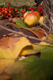 Autumn still nature composition Royalty Free Stock Images