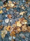 Autumn stone path Stock Images