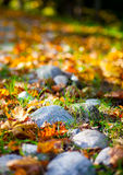 Autumn stones Royalty Free Stock Photography