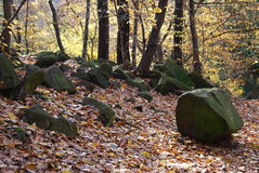 Autumn and stones in the beech forest Royalty Free Stock Image