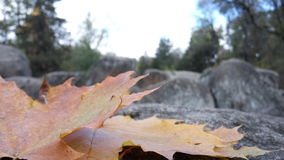 Autumn, stones, leaf, nature Royalty Free Stock Images