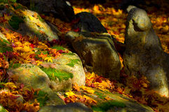 Autumn stones Royalty Free Stock Photos