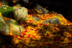 Autumn stones Royalty Free Stock Images