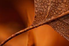 Autumn stories Royalty Free Stock Image