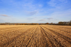 Autumn straw stubble Stock Photos