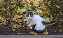 Autumn and stray cat. stock image