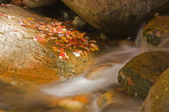 Autumn stream Stock Images