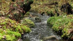 Autumn Stream stock video footage