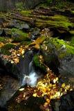 Autumn stream Stock Photos