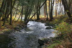 Autumn stream. Stream in Autumn woods with contrasing light patterns Stock Photos