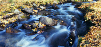 Autumn stream Royalty Free Stock Images