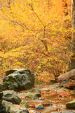 Autumn Stream. A Mountain Stream in the Fall Season Stock Image