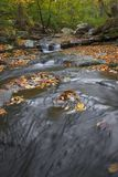 Autumn Stream Stock Image