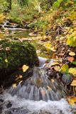 Autumn Stream Royalty Free Stock Photo