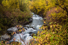 Autumn stream. Beautiful Palisades Creek in Idaho, USA flowing through the forest on a fine autumn morning Royalty Free Stock Image