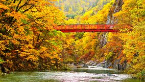 Autumn Stream stock foto's