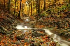 Autumn Stream Stock Photography