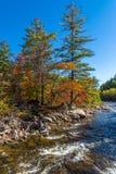 Autumn Stream Arkivfoto