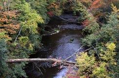 Autumn Stream Fotografie Stock