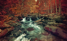 Autumn Stream fotografia stock