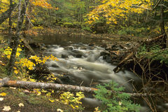 Autumn stream. A peaceful stream runs near hiking trails in the Cape Breton Highlands National Park in Nova Scotia, Canada, surrounded by autumn colour stock photo