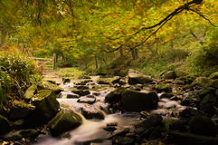 Autumn Stream Royaltyfri Fotografi
