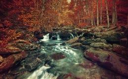Autumn stream Stock Photo
