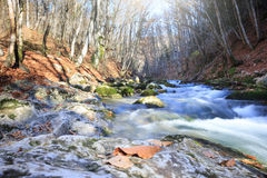 Autumn stream. Beautiful rapid river with mossy stones flowing through autumn forest Stock Images