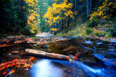 Autumn stream Stock Photography